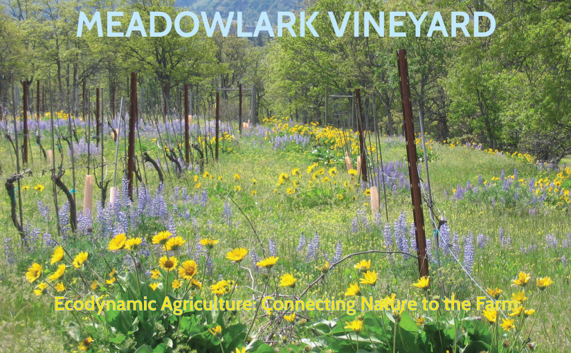 Meadowlark Vineyard 2.23.2014