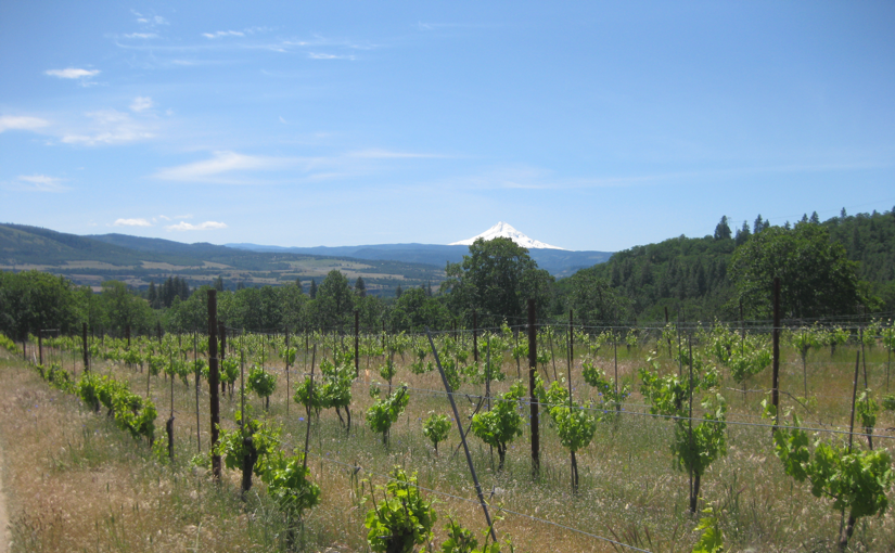 Moutain View from Meadowlark Vineyard